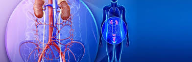 physical-areas-treated-by-urologists-03