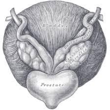 Prostatitis - Prostate Urologist NYC